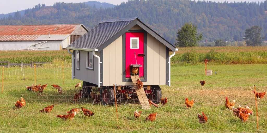 Benefits of painting for Chicken Coop